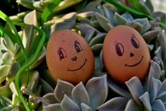 Funny eggs with eyes and smiles on green grass royalty free stock images
