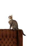 Funny european cat Royalty Free Stock Photos