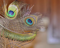 Funny Face. A fun, smiling face made of Peacock feathers against an out of focus background Stock Photo