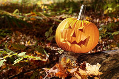 Funny face pumpkin on tree trunk Royalty Free Stock Photo