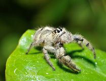 Funny face spider Stock Photo