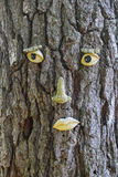 Funny face on tree bark Stock Images