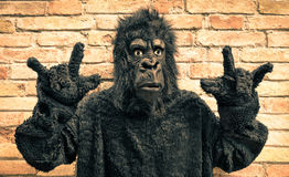 Funny fake gorilla with rock and roll hand gesture. Hipster concept of anthropomorphic evolution of modern monkey stock photo