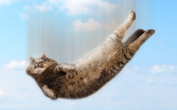 Funny falling cat. A funny thick fluffy cat falls from a height. Round him there are clouds stock photography