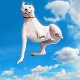 Funny falling dog Stock Photo