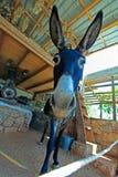 Funny Farm Donkey with Long Ears. Crete Stock Photo