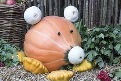 Funny figure in the form of pigs made from pumpkins Stock Photography