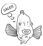 Funny fish and bubble speech with word Sale on white background.  Royalty Free Stock Photos