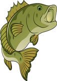 Funny fish cartoon Stock Image