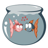 Funny Fish. Cool cartoon goldfish couple in love in a fish tank Stock Photography
