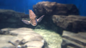 A funny fish submarine. Underwater World and a fish in the eye Royalty Free Stock Photo