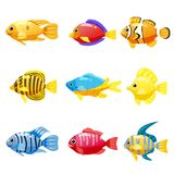 Set cartoon Funny fish vector characters. Colorful coral reef tropical fish set vector illustration. Sea fish collection. Funny fish vector characters. Colorful Royalty Free Stock Photos