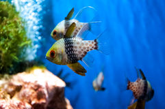 Funny fish. In the water Royalty Free Stock Photo