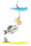 Funny fishing Royalty Free Stock Photo