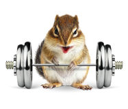 Funny fitness animal chipmunk with dumbbell on white. Funny fitness animal chipmunk with dumbbell stock image