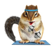 Funny fitness, animal chipmunk lifting dumbbell stock photo