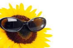 Free Funny Flower Stock Photography - 5976752