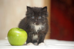 Funny fluffy black and white kitten Stock Photo