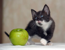 Funny fluffy black and white kitten Stock Images