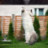 Funny fluffy cat jumping outdoors. Adorable fluffy cat outdoors in summer Royalty Free Stock Photography