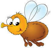 Funny fly Stock Image