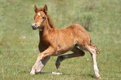 Funny foal Stock Image