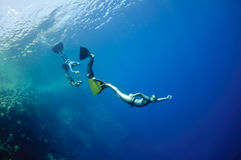 Funny freediving games at the Red Sea. The group of freedivers try to dive in a line, catching each other by monofin, near the coral reef at the depth of Blue stock photos