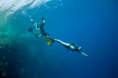 Funny freediving games at the Red Sea. The group of freedivers try to dive in a line, catching each other by monofin, near the coral reef at the depth of Blue royalty free stock photo