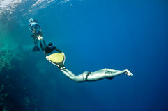 Funny freediving games at the Red Sea. The group of freedivers try to dive in a line, catching each other by monofin, near the coral reef at the depth of Blue royalty free stock photos