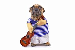 Funny French Bulldog dog dressed up as guitar player wearing a costume with striped shirt, pants and fake arms holding a guitar, i