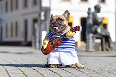 Funny French Bulldog dog dressed up as street perfomer musician wearing a costume with striped shirt and fake arms holding guitar