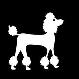 Funny French Poodle dog Stock Photos