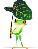 Funny frog Royalty Free Stock Photos