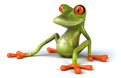 Funny frog Stock Photography