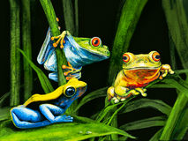 Funny frog. Three funny frog on leaf Royalty Free Stock Images