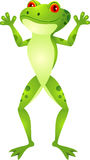 Funny frog cartoon Stock Image
