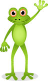 Funny frog cartoon Stock Photography