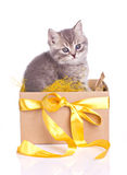 Funny furry gray kitten in a box set Royalty Free Stock Photography