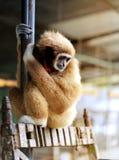 Funny furry monkey stock photo