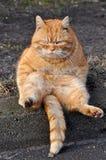 Funny Garfield cat stock photo