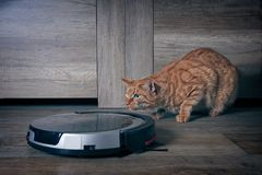 Funny ginger cat lurking behind a robot vacuum cleaner royalty free stock photo