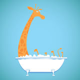 Funny girafe in a bath. Humor cartoon illustartion of a funny girafe in a bath vector illustration