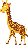Funny giraffe cartoon character Stock Images