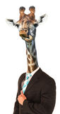 Funny Giraffe Man Concept Royalty Free Stock Photo