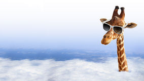 Funny giraffe with sunglasses. Coming out of the clouds stock image