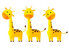 Funny giraffes. Isolated on white Stock Photo