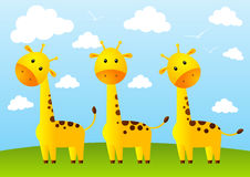 Funny giraffes. On meadow background Royalty Free Stock Images