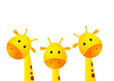 Funny giraffes. On white background Stock Image