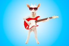 Funny goat showing tongue in sunglasses with electric guitar. On blue background royalty free stock photography