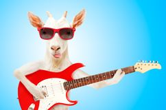 Funny goat in sunglasses with electric guitar. On blue background royalty free stock image